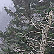 Skeletal Treescape Poster
