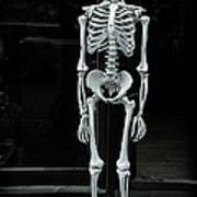 Skeleton New York City Poster