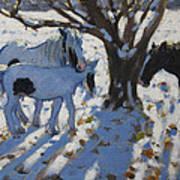 Skewbald Ponies In Winter Poster