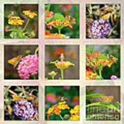 Skipper Butterfly Collage Poster