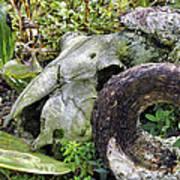 Skull At Cluny Gardens Poster