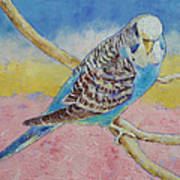 Sky Blue Budgie Poster