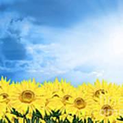 Sky Sunflower Poster