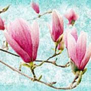 Skyward Magnolia Painterly 4 Poster