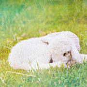 Sleeping Lamb Green Hue Poster