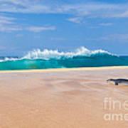Sleeping Monk Seal At Papohaku Beach In Molokai Hawaii  Poster