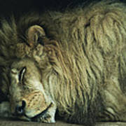Sleepy Beast Poster