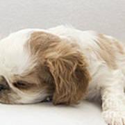 Sleepy Head Poster