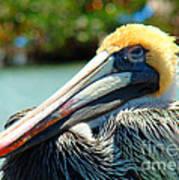Sleepy Pelican Poster