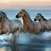 Slow Motion Horses Poster