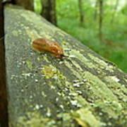 Slug Life Poster