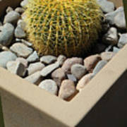 Small Barrel Cactus In Planter Poster