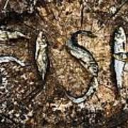 Small Dried Fishes Forming The Word Fish Poster