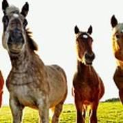 Smiles Horses Poster