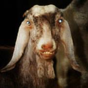 Smiling Egyptian Goat I Poster