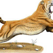 Smilodon Saber-toothed Tiger Poster