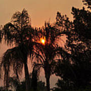 Smoke Covered Sky Sunset Thru The Palm Trees Poster