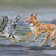 Smooth Collie Trying To Herd Geese Poster