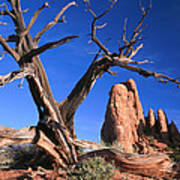 Snag At  Fiery Furnace Labyrinth Arches Poster