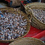Snails For Sale Poster