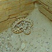 Snake In Ruins Poster