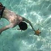 Snorkeller Touching Starfish On Seabed Poster