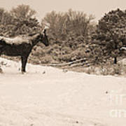 Snow Bound Horse Poster