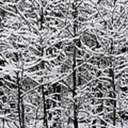 Snow Branches Poster