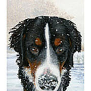 Snow Bumper Poster