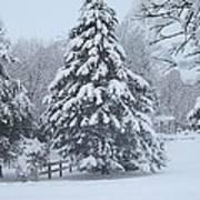 Snow Conifer 2-1-15 Poster