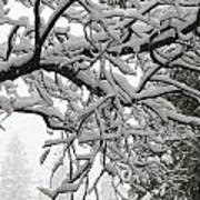 Snow Covered Branches Poster