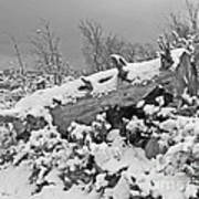 Snow Covered Tree Log In Black And White Poster
