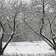 Snow Covered Trees In A Field. Poster