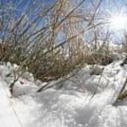 Snow Grass Poster
