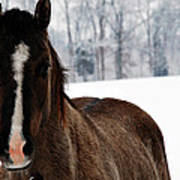 Snow Horse Poster