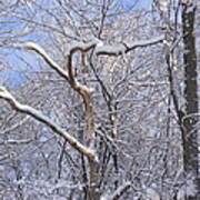 Snow In Connecticut Poster
