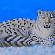 Snow Leopard Poster by David Hawkes