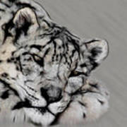 Snow Leopard Digital Art Poster