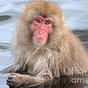 Snow Monkey In The Onsen Poster