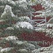 Snow On A Pine Tree With A Red Barn. Poster