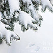 Snow On Winter Branches Poster by Elena Elisseeva