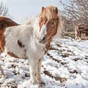 Snow Ponies - Colour Poster