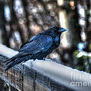 Snow Raven Poster by Skye Ryan-Evans