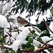 Snow Scene Of Little Bird Perched Poster