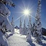 1m4882-snow Laden Tree Sunburst Poster
