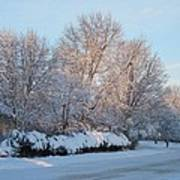 Snow Trees Sunrise 2-2-15 Poster