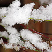 Snow Twig Abstract Poster