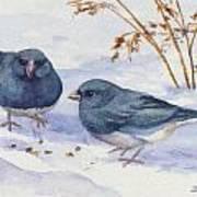 Snowbirds Poster