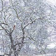 Snowfall And Apple Tree Poster