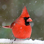 Snowflake Cardinal Poster